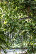 Martha Brae River Prints - Tropical Foliage Print by Melanie Lankford Photography