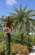Garden Scene Metal Prints - Tropical Garden Metal Print by Kim Hojnacki