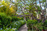 Big Tree Photos - Tropical Garden.Mauritius by Jenny Rainbow
