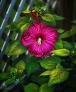 Tropical Hibiscus Print by Brenda Bryant