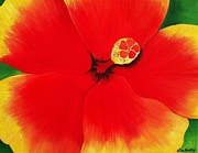 Awaken Paintings - Tropical Hibiscus by Lisa Bentley