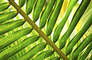 Backlit Metal Prints - Tropical leaf Metal Print by Elena Elisseeva