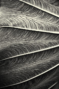 Joseph Duba Metal Prints - Tropical Leaf No.1 2009 v.2 Metal Print by Joseph Duba