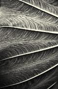 Tropical Leaf No.1 2009 V.2 Print by Joseph Duba
