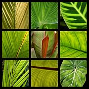 Large Format Posters - Tropical Leaves Poster by Art Block Collections