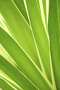 Backlit Photo Posters - Tropical leaves Poster by Elena Elisseeva