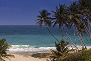 Beach Photograph Posters - Tropical Paradise Poster by Andrew Soundarajan