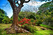 Jenny Rainbow - Tropical Park. Mauritius