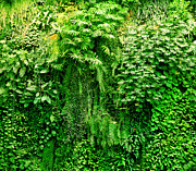 Freshness Art - Tropical plants green background by Michal Bednarek
