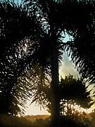 Ian  MacDonald - Tropical Silhouette