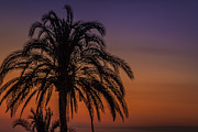 Alex Saunders - Tropical Sunset
