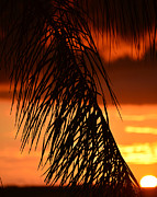 Tropical Sunset Prints - Tropical sunset Print by David Lee Thompson
