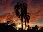 Tropical Photographs Originals - Tropical Sunset by Kandy Hurley