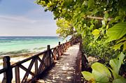 Tim Hester - Tropical Walkway