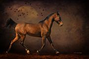 Karen Slagle Photo Framed Prints - Trotting Into the Night Framed Print by Karen Slagle