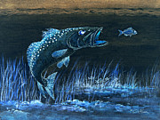 Speckled Trout Metal Prints - Trout Attack 1 In Blue Metal Print by Bill Holkham