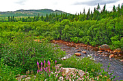 Trout Digital Art - Trout River and Fireweed in Labrador by Ruth Hager