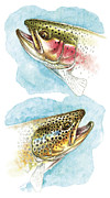 Flyfishing Painting Prints - Trout Study Print by JQ Licensing