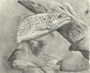 White River Drawings Prints - Trout#1 Print by Christopher Hughes