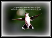True Friendship Framed Prints - True Friends - Hummingbird Framed Print by Travis Truelove