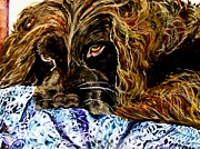Spaniels Paintings - Trying to Sleep Here by Lil Taylor