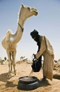 Sahara Sunlight Framed Prints - Tuareg Nomad Watering Camel, Escarpment Framed Print by Alberto Arzoz