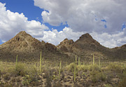 Tucson Art - Tucson Mountains by Elvira Butler