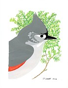 Titmouse Paintings - Tufted Titmouse by Derick Webb