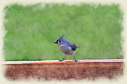 Dan Friend - Tufted Titmouse on post rail