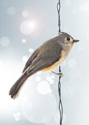 Twinkle Digital Art Framed Prints - Tufted Titmouse Twinkle Framed Print by Bill Tiepelman