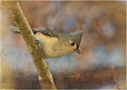 Tufted Titmouse With Texture Print by Debbie Portwood