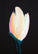 Whites Paintings - Tulip 1 by Karen Nicholson
