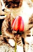 Tulip And A Cat Print by Moriah Poler