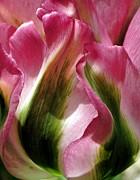 Tulip Print by  Andrea Lazar