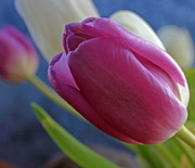 Kathy DesJardins - Tulip Close Up