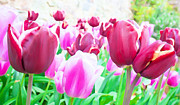 Easter Flowers Prints - Tulip Delight Print by Semmick Photo