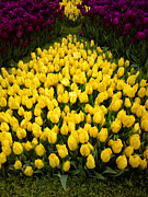 All - Tulip Festival - 15 by Hanza Turgul
