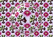 Flower Kaleidoscopes Prints - Tulip Kaleidoscope Under Glass Print by Rose Santuci-Sofranko