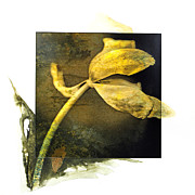 Textured Effect Prints - Tulip on a textured brown background. Print by Bernard Jaubert
