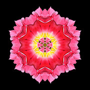 Tulip Peach Blossom I Flower Mandala Print by David J Bookbinder