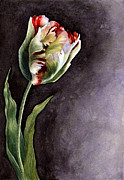 Graceful Painting Posters - Tulip Semper Augustus Poster by Isabella Kung