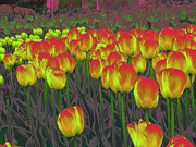 Gardens Digital Art Originals - Tulipmania 002 by Pete Daize