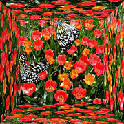 Snider Framed Prints - Tulips and Butterflies  Framed Print by Byron Snider
