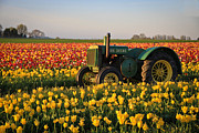 Tulips And Tractors Print by Steve McKinzie