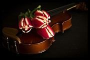 Marriage Photos - Tulips and Violin by Edward Fielding