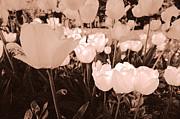 Arkady Kunysz - Tulips