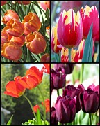 Impressionism Acrylic Prints Photos - Tulips collages by France Laliberte
