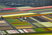 Farmscapes Metal Prints - Tulips Fields, Lisse Metal Print by Bram van de Biezen