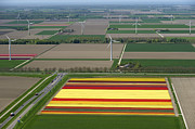 Agronomy Photos - Tulips Fields, Zeewolde by Bram van de Biezen
