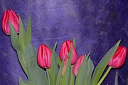 Birds Love Season Posters - Tulips from Persia Poster by Sonali Gangane